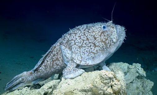Необычная рыба с ногами поразила сеть: зрелищное видео