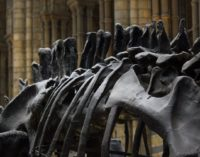 Ученые сообщили потрясающую новость о динозаврах — подробности