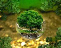Эко-карантин: как позаботиться об окружающей среде во время самоизоляции