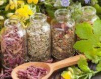5 рецептов из лекарственные трав для здоровья сердца
