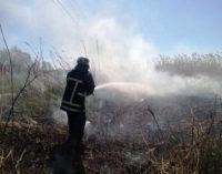 В Запорожской области за сутки случилось 4 пожара в экосистемах — один лесной