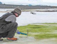 Ученые назвали причину зеленого снега в Антарктиде