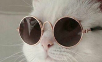Коты в образе культовых режиссеров: появился забавный флешмоб
