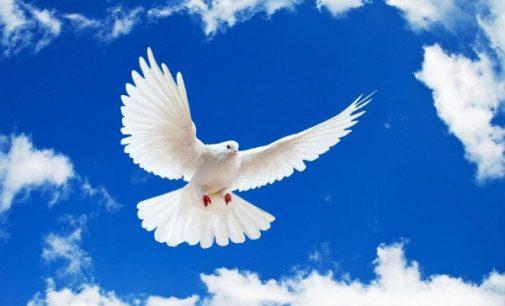 День мира: актуальность даты для Днепра