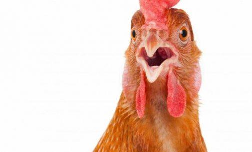 В Днепр и область из Польши попала опасная курятина: подробности