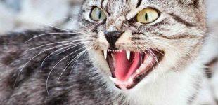 Лучше не обижать: днепрянам напоминают, что кошки бывают мстительными