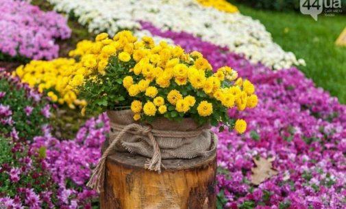 История любви оживает на фестивале хризантем: в Киеве проходит выставка цветов на «Співочому полі». Разыгрываем билеты