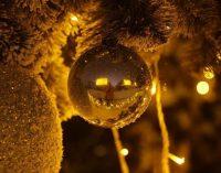 Новогодняя елка страны: как она будет выглядеть и где ее установят