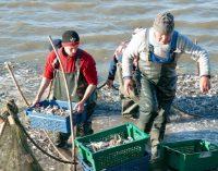 В озеро на юге Одесской области выпустили более 5 тонн рыбы